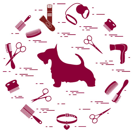 Scotch terrier silhouette, combs, collar, leash, razor, hair dryer, scissors arranged in a circle. Health care, grooming, caring for a dog, exhibition. Illustration