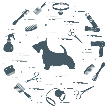 Scotch terrier silhouette, combs, collar, leash, razor, hair dryer, scissors, sprayer arranged in a circle. Health care, grooming, caring for a dog, exhibition. Ilustração