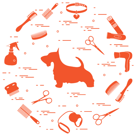 Scotch terrier silhouette, combs, collar, leash, razor, hair dryer, scissors, sprayer arranged in a circle. Health care, grooming, caring for a dog, exhibition. Illustration