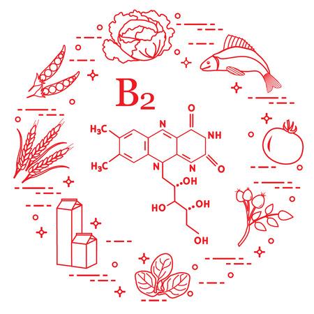 Foods rich in vitamin B2. Cabbage, fish, tomato, dog rose, spinach, milk, wheat, peas. Vettoriali
