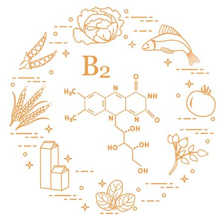 Alimenti ricchi di vitamina B2. Cavolo, pesce, pomodoro, rosa canina, spinaci, latte, grano, piselli.