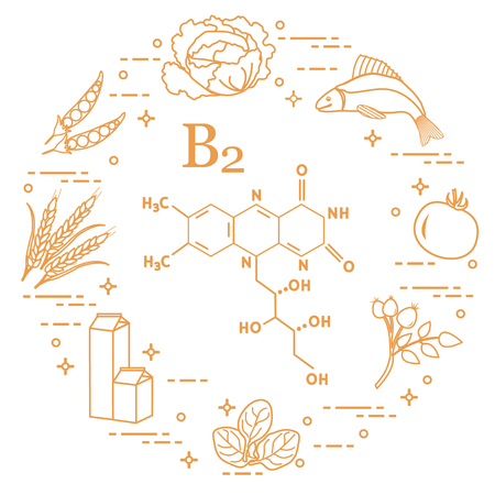 Foods rich in vitamin B2. Cabbage, fish, tomato, dog rose, spinach, milk, wheat, peas.
