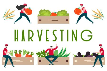 Vector illustration with people harvesting vegetables, boxes, harvesting inscription. Harvesting, agricultural work. Fall Harvest Fest design. Design for web page, presentation, print.