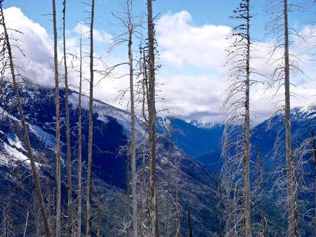 arboles secos: Montañas cubiertas de nieve, árboles muertos, cielo azul, nubes blancas. Parque Nacional North Cascades, Washington, EE.UU.. Foto de archivo