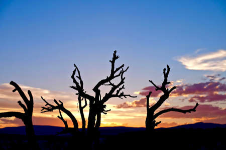 Dead Trees Silhouette on Sunset Sky. Grand Staircase Escalante National Park, Utah State, USA. Stock Photo