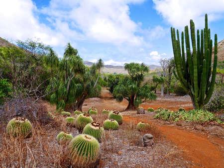 Cactused in Koko crater botanical garden, Big Island, Honolulu, Hawaii.