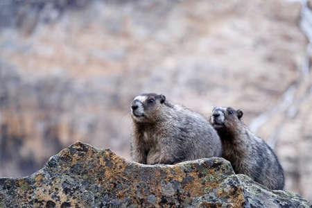 Jasper National Park. Canadian Rocky Mountains. Alberta. Canada. Stock Photo