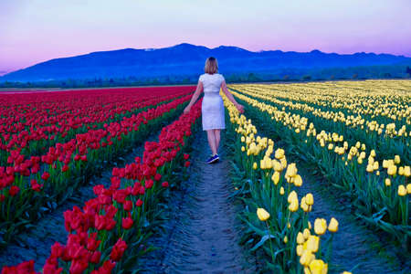 dutch girl: Young woman in colorful tulip fields at sunset. Tulip Festival. Skagit Valley. Mount Vernon. Seattle. WA.  United States.