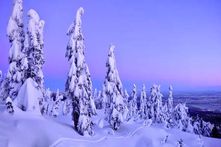 Ski run on Cypress Mountain and Vancouver skyline at sunset. Trees covered with snow after heavy snowfall. West coast.  North Vancouver. British Columbia. Canada. Stock Photo