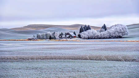 Farm house in rolling hills farmlands. Frozen crops and trees covered with frost in winter. Palouse. Southeast Washington. United States of America.