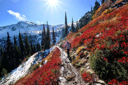 Vacation travel in Cascade Mountains. Young woman hiking along steep slope covered with red huckleberry bushes and snow in North Cascades National Park. Maple Pass near Seattle. Washington. United States. Stock Photo