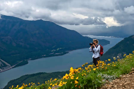 Middle age woman hiking and photographing scenic view of Columbia River Gorge in alpine meadows with arnica flowers in full bloom. Portland. Oregon. United States of America. Stock Photo