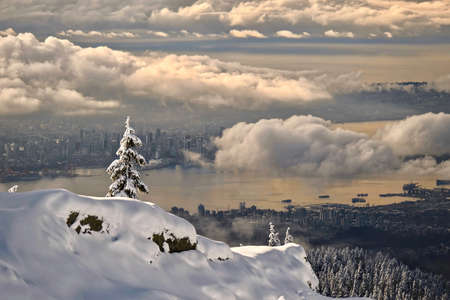 Tree covered with snow on cliff above city and ocean. Winter scenery in Mount Seymour Provincial Park. View of Vancouver downtown and Coal Harbour in winter. British Columbia. Canada