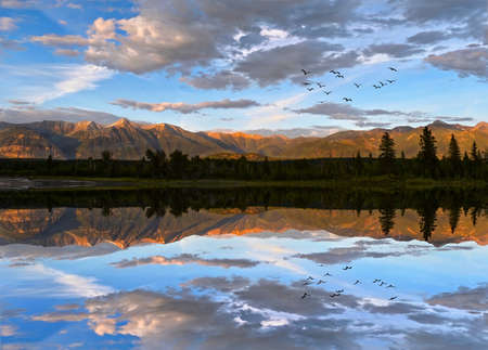 Flock of birds flying over calm river at sunset with Rocky Mountains at the background. Kootenay River in British Columbia. Canada. Stok Fotoğraf