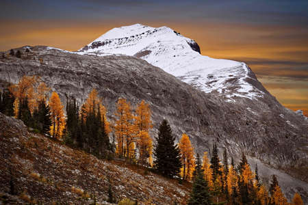 Golden larch trees on mountain slope with snow covered peak and colorful sunset sky in the background. Burstall pass in Canadian Rockies. Kananaskis. Alberta. Canada.