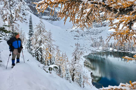 Man hiker snowshoeing in Canadian Rockies with alpine lake view. Yellow larch trees covered with fresh snow on a sunny day. Winter vacation in Banff National Park. Alberta. Canada Фото со стока