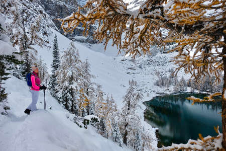 Young woman snowshoeing in Lake Louise area among yellow larch trees covered with fresh snow. Banff National Park. Canadian Rockies. Alberta. Canada Фото со стока