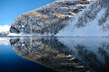 Perfect reflection of Big Beehive mountain with yellow larch trees and fresh snow in calm alpine lake. Canadian Rocky mountains. Lake Agnes. Alberta. Canada Фото со стока