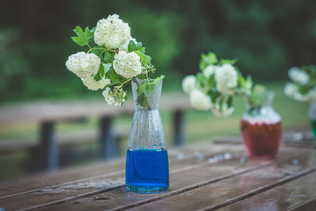 Glass vases with white hydrangeas and colored water on wet wooden table in rainy day. Vessels with bunch of white flowers with green leaves on garden bench in rainy park or yard