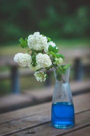 Bouquet of white hydrangeas in glass vase with blue water on wet wooden table in rainy day. Bunch of white flowers with green leaves on garden bench in rainy park or yard