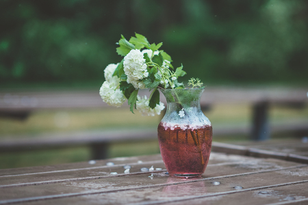 Bouquet of white hydrangeas in glass vase with red water on wet wooden table in rainy day. Bunch of white flowers with green leaves on garden bench in rainy park or yard Фото со стока