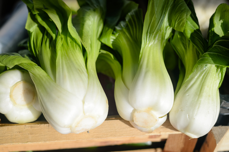 bok choy: Bunches of fresh organic bok choy in pile at local farmers market backgroud Stock Photo