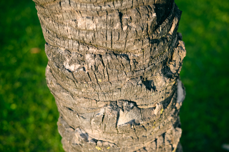 bark palm tree: Closeup of a palm tree bark trunk outdoors background textured