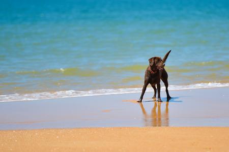 砂浜の晴れた日の背景に美しいうれしそうな犬 写真素材