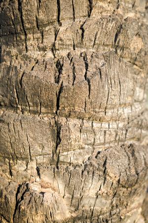 bark palm tree: Palm tree bark texture background