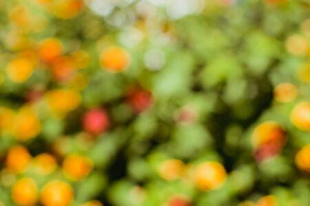 Arbusto de la flor desenfocada con flores de colores brillantes en el fondo soleado al aire libre