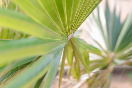 Abstract close up of tropical exotic green palm tree leaf texture