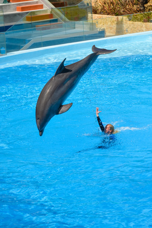 bottlenose: Algarve, Portugal - June 4, 2016: Dolphinarium - show with dolphins in Zoo Stock Photo