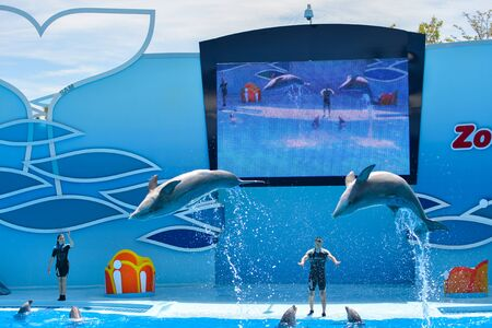 Zoomarine Portugal - June 4, 2016: Clear water with amazing dolphins show Algarve Water Theme Park Dolphinarium, Oceans of Fun background Editorial