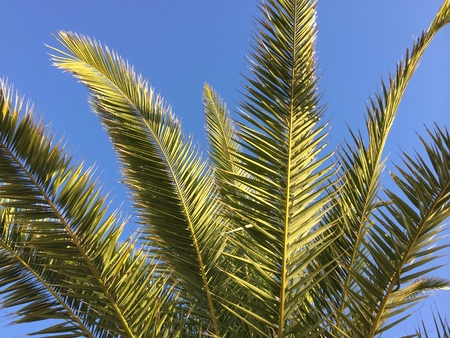 Green palm tree leaves over blue sunny sky outdoors background Stock Photo