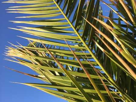 Palm trees in the blue sunny sky background Stock Photo