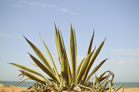 Picture of wild beautiful green plant over blue sky background