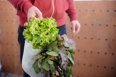 Person holding bag with nutritious salad vegetables grocery on shopping market background Фото со стока