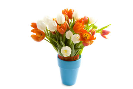 Colorful tulips in blue vase isolated over white Stock Photo - 6254970