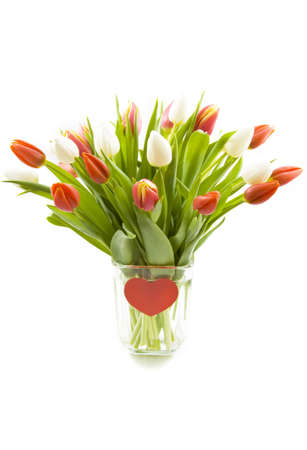 Red and white tulips in a vase isolated over white photo