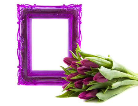 funeral background: Purple ornament frame with purple tulips isolated over white