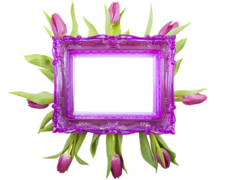 Purple picture frame with purple tulips isolated over white photo