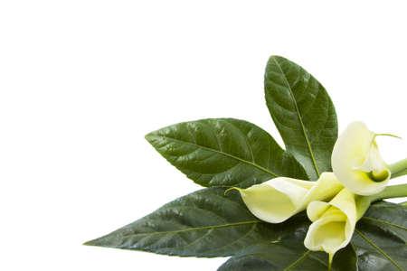 Drie bloemen op een blad op een witte achtergrond