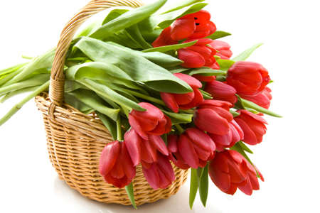 Basket filled with red tulips isolated over white Archivio Fotografico
