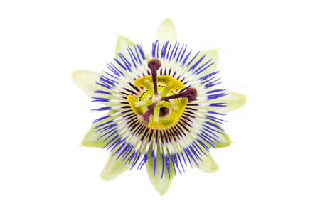 passion: Passion flower close up isolated over white