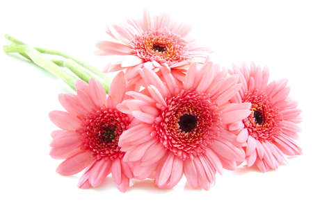 Four pink gerberas isolated over white photo