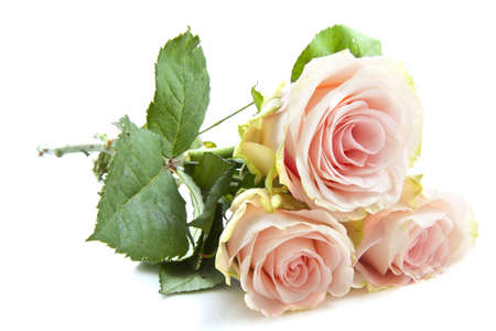 funeral background: Beautiful pink roses isolated on a white background