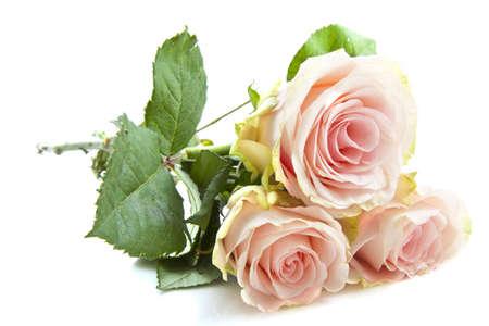 rosas amarillas: Hermosas Rosas Rosa aislados en un fondo blanco