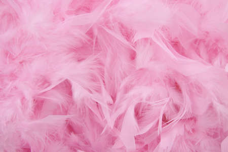 Lots of pink feathers for background use Stock Photo
