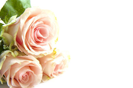 Three pink roses in the corner isolated over white photo