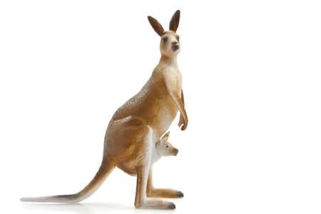 Kangaroo with little one in her bag isolated over white Stock Photo